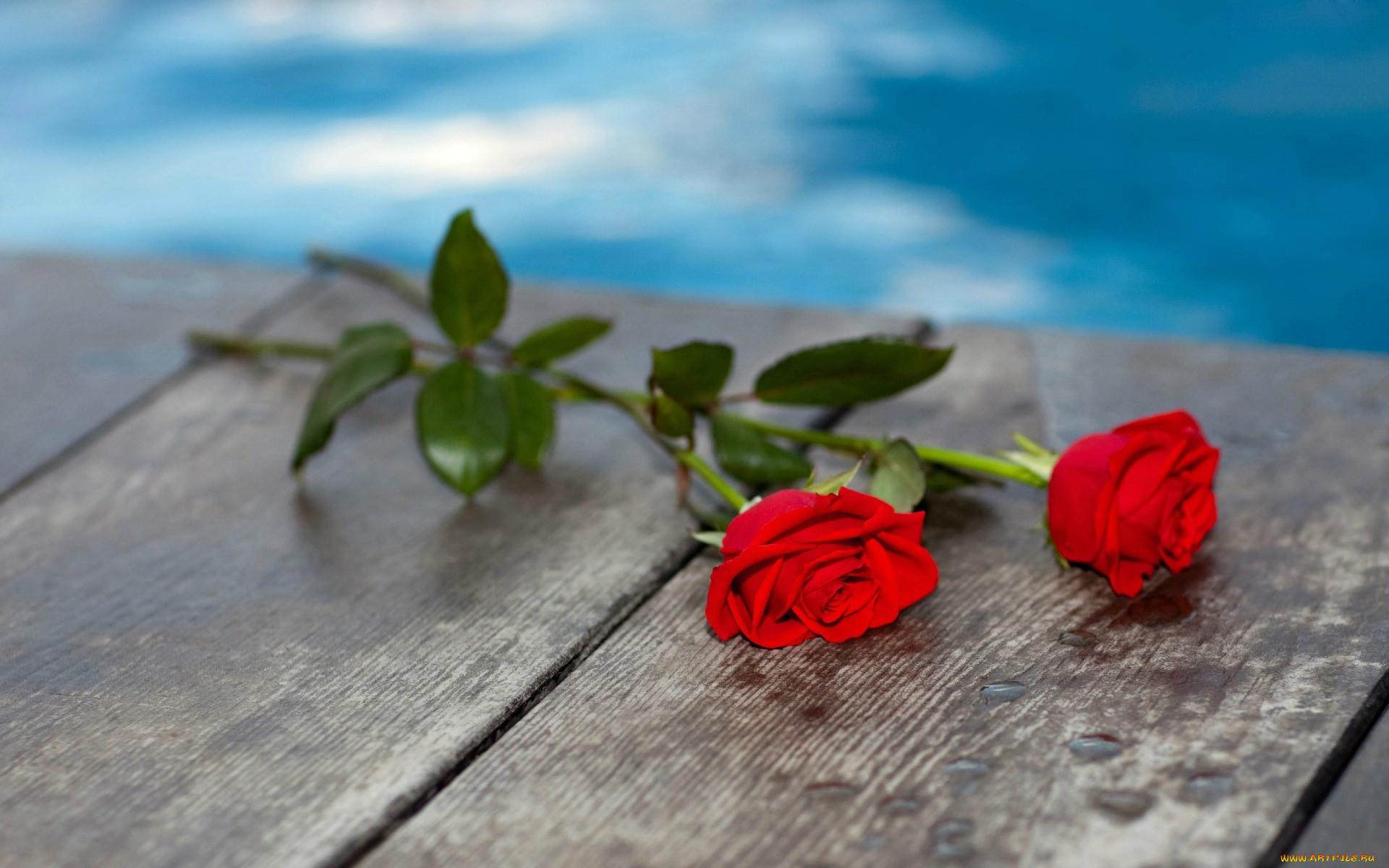 две розы картинка фото пограничная одна